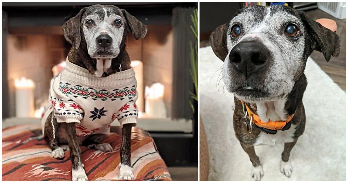 https://ilovemydogsomuch.com/wp-content/uploads/2021/09/shelter-dog-gets-spa-days.jpg