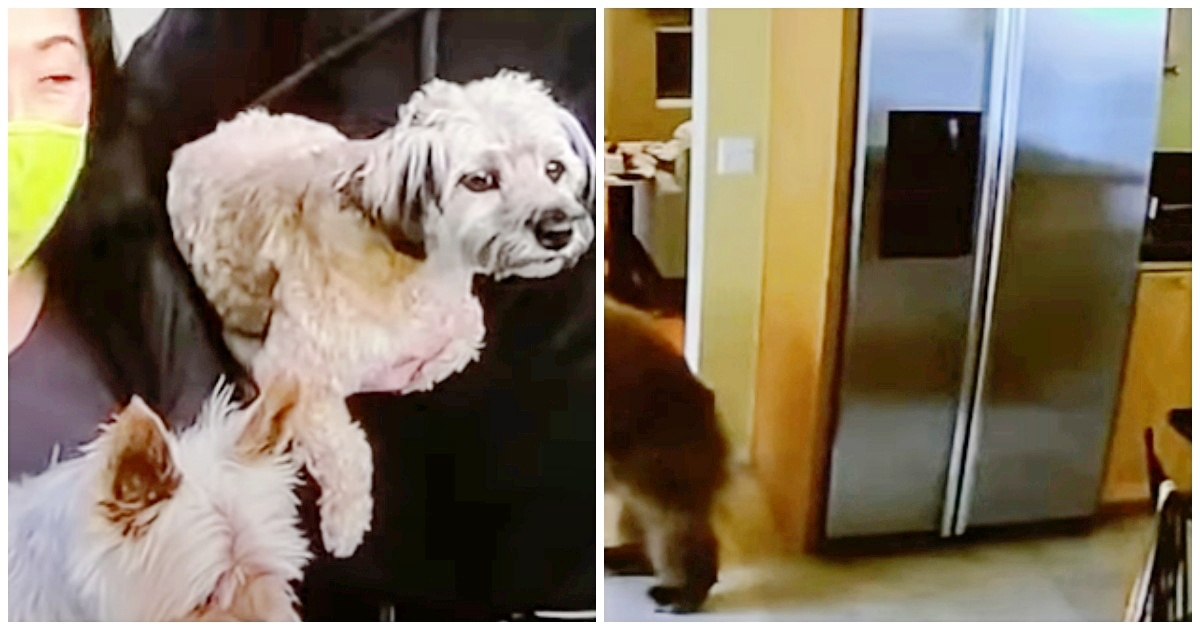 https://ilovemydogsomuch.com/wp-content/uploads/2021/09/small-dog-chased-intruder.jpg