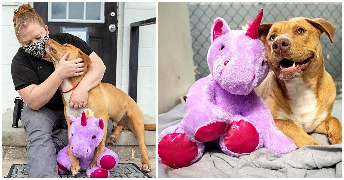 https://ilovemydogsomuch.com/wp-content/uploads/2021/09/stray-dog-gets-a-unicorn-toy.jpg