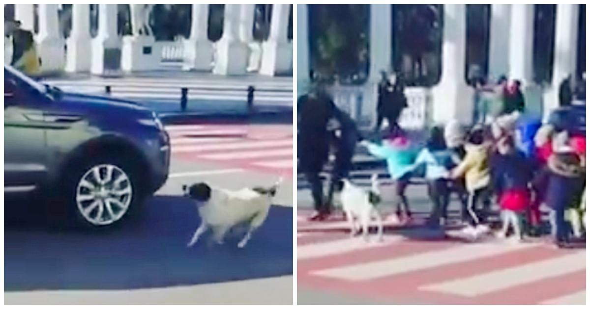 https://ilovemydogsomuch.com/wp-content/uploads/2021/09/stray-dog-stops-traffic-for-kids.jpg