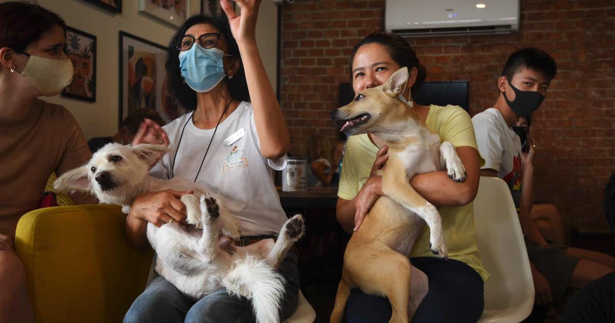 https://ilovemydogsomuch.com/wp-content/uploads/2021/09/thailand-puppy-cafe-raises-awareness-to-stray-dogs.jpg