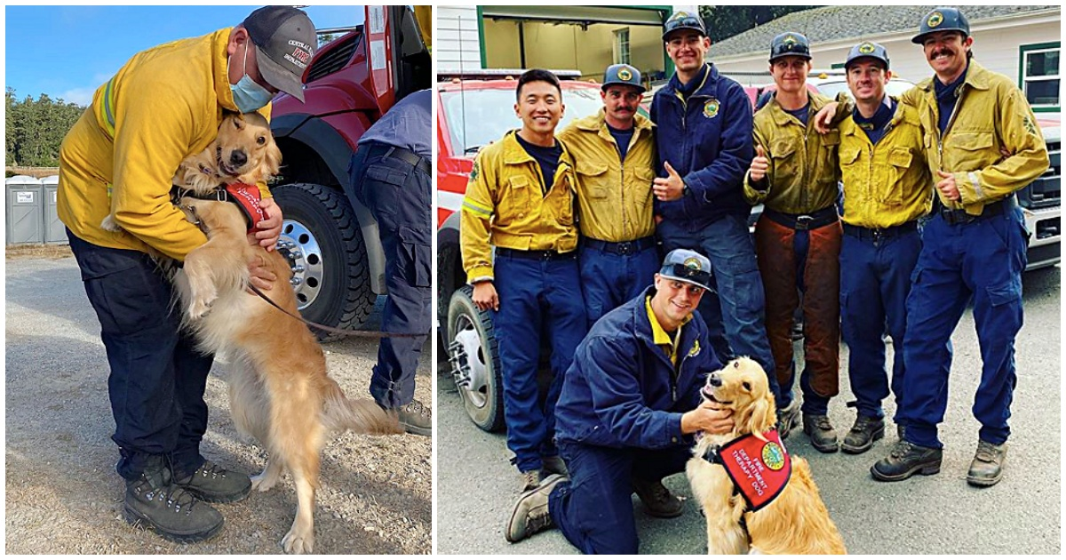 https://ilovemydogsomuch.com/wp-content/uploads/2021/09/therapy-dogs-help-firefighters.jpg