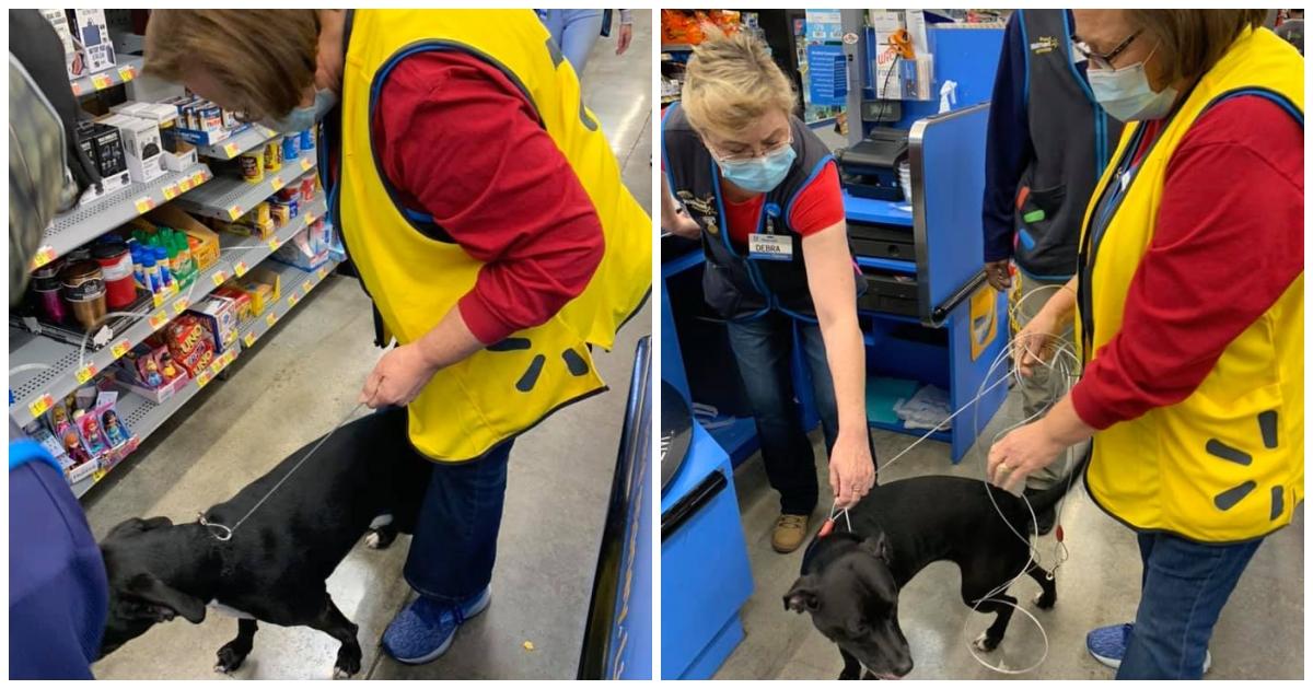 https://ilovemydogsomuch.com/wp-content/uploads/2021/09/walmart-cashier-reunited-with-dog.jpg