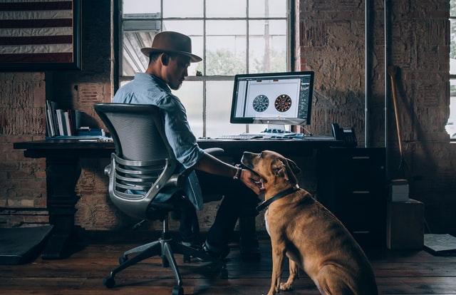 work computer and dog