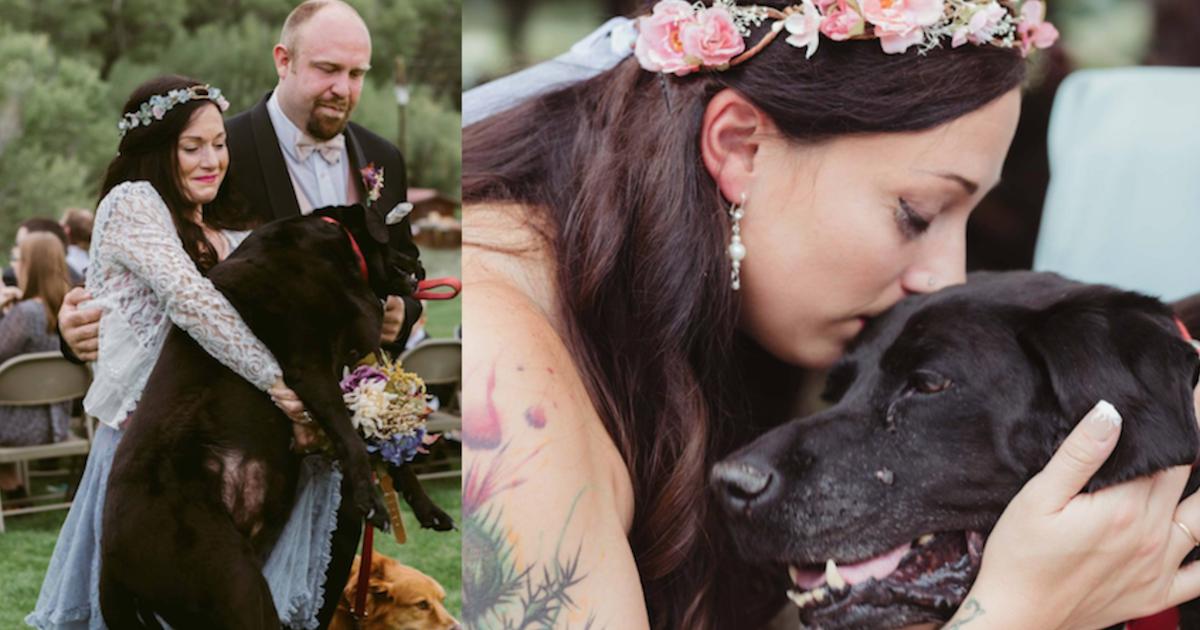 https://ilovemydogsomuch.com/wp-content/uploads/2021/10/brides-sickly-dog-carried-down-aisle.jpg