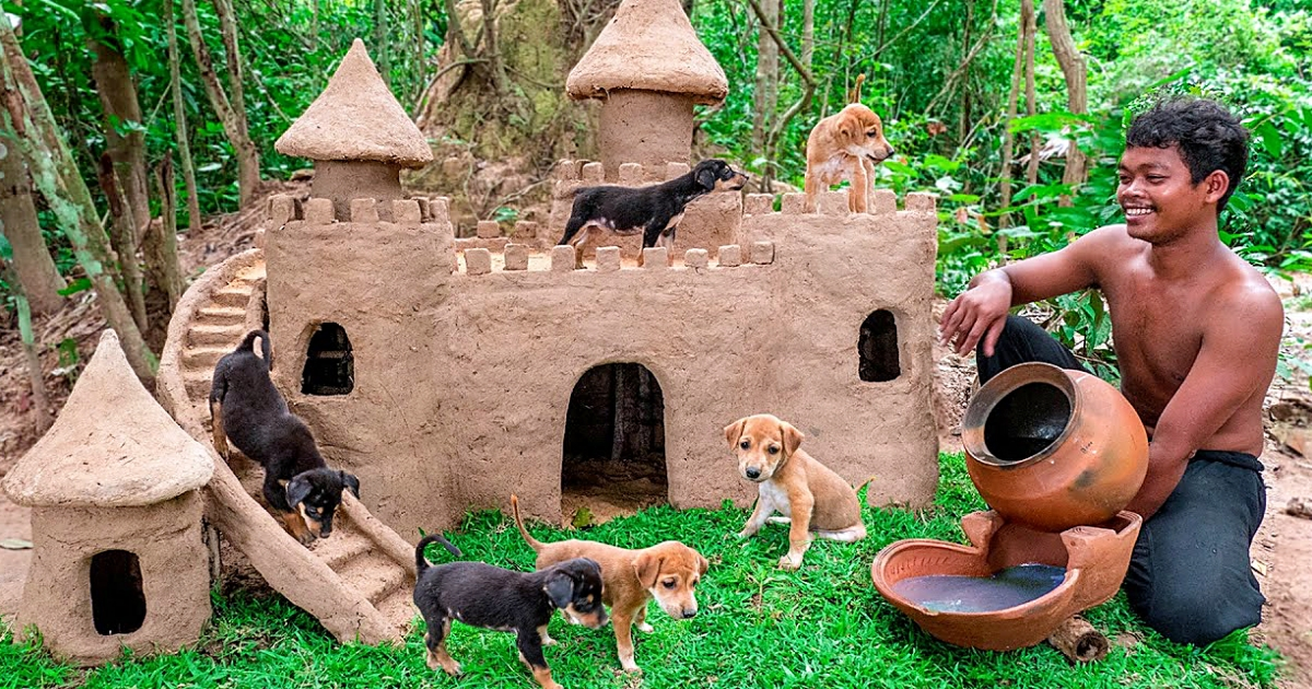 https://ilovemydogsomuch.com/wp-content/uploads/2021/10/castle-for-abandoned-dogs.jpg