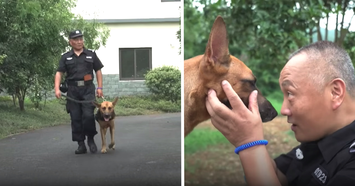 https://ilovemydogsomuch.com/wp-content/uploads/2021/10/cop-gives-up-savings-to-care-for-K9.jpg