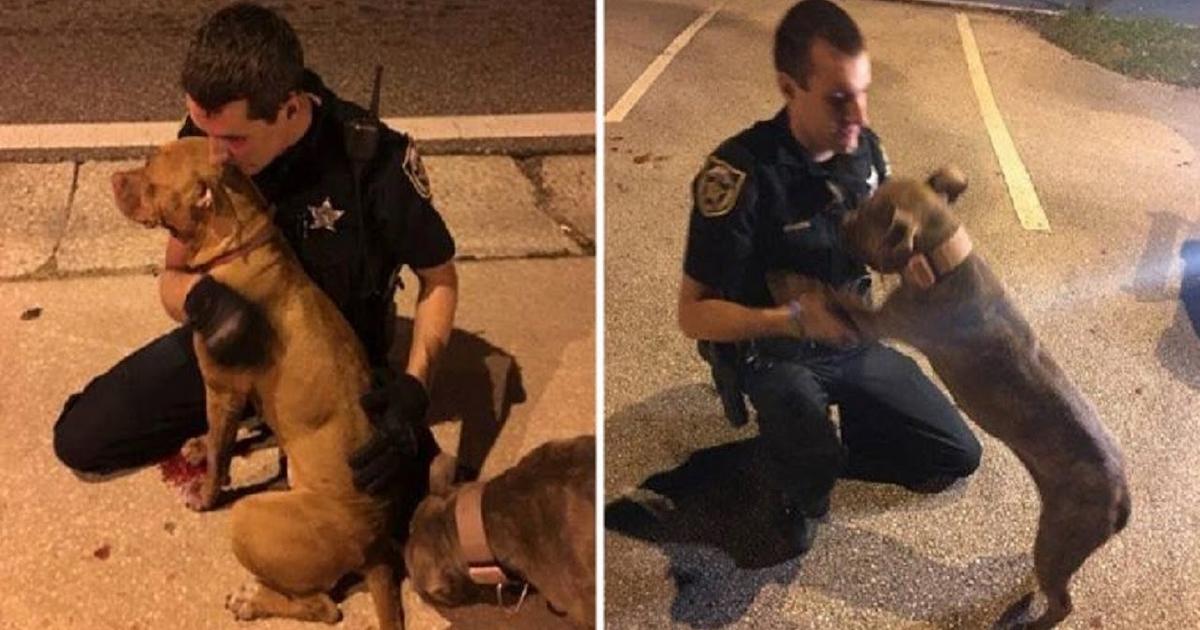 https://ilovemydogsomuch.com/wp-content/uploads/2021/10/cops-and-pit-bulls.jpg