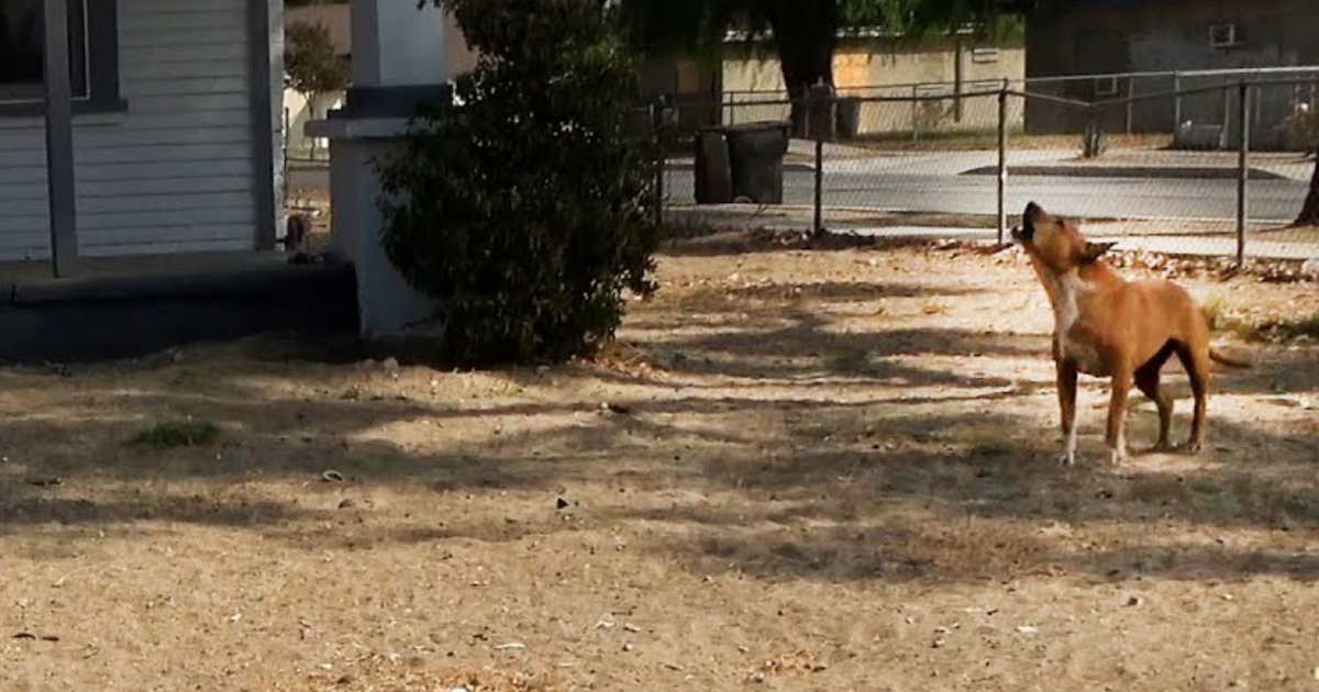 https://ilovemydogsomuch.com/wp-content/uploads/2021/10/dog-guards-house-after-owner-passed.jpg