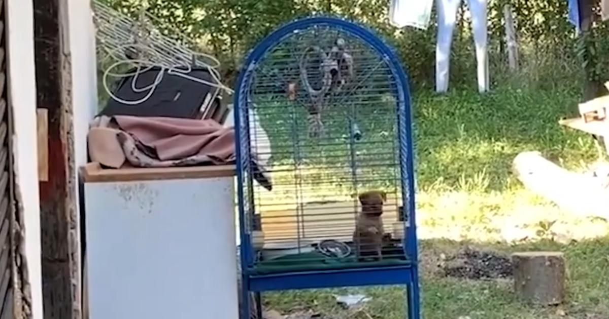 https://ilovemydogsomuch.com/wp-content/uploads/2021/10/dog-in-a-birdcage.jpg