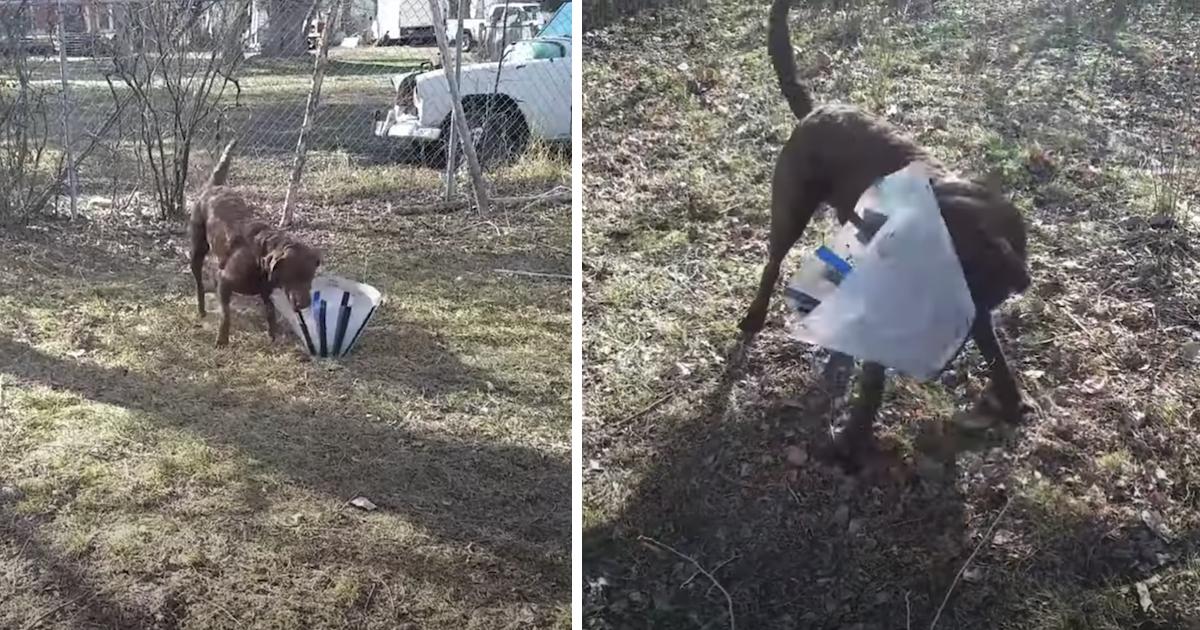 https://ilovemydogsomuch.com/wp-content/uploads/2021/10/dog-in-cone-of-shame.jpg