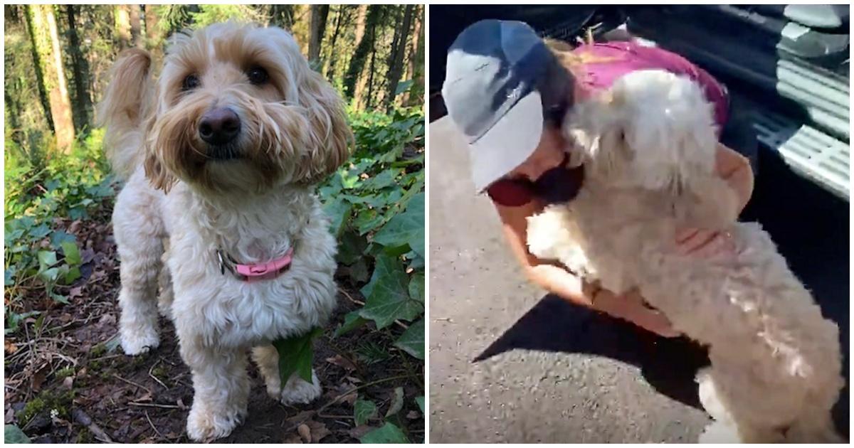 https://ilovemydogsomuch.com/wp-content/uploads/2021/10/dog-rescue-in-the-woods.jpg