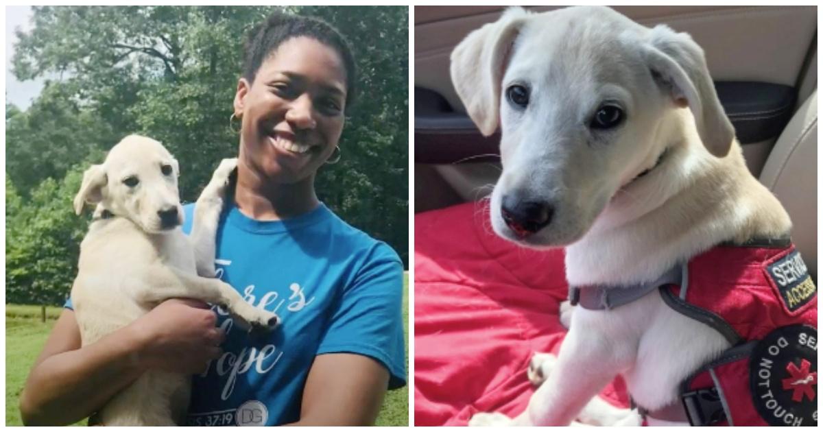 https://ilovemydogsomuch.com/wp-content/uploads/2021/10/dog-saves-diabetic-owners-life.jpg