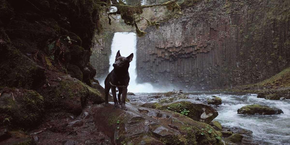 https://ilovemydogsomuch.com/wp-content/uploads/2021/10/dog-walking-trails.jpg