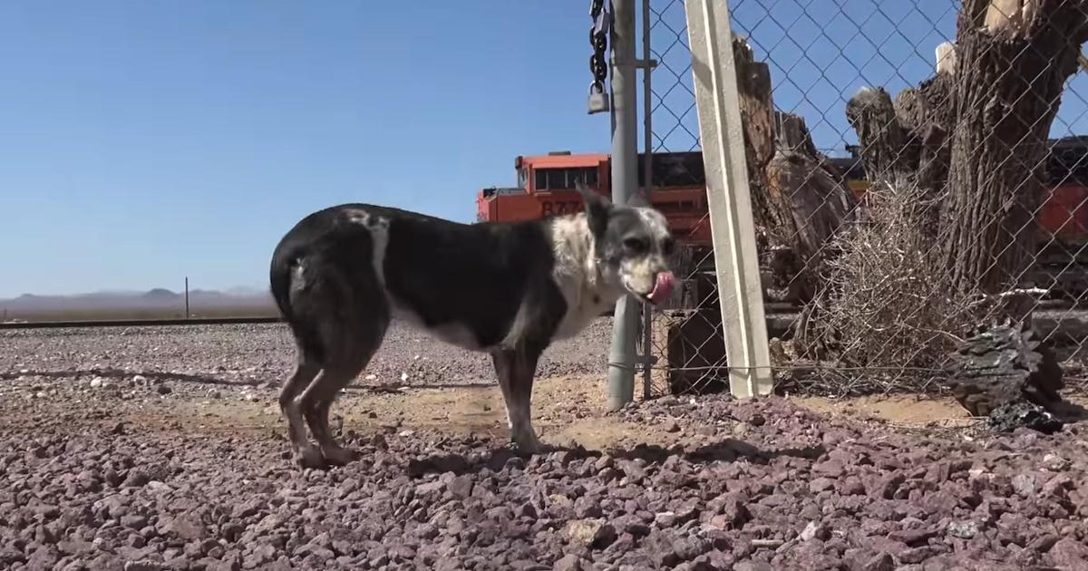 https://ilovemydogsomuch.com/wp-content/uploads/2021/10/dogs-abandoned-in-desert-rescued.jpg