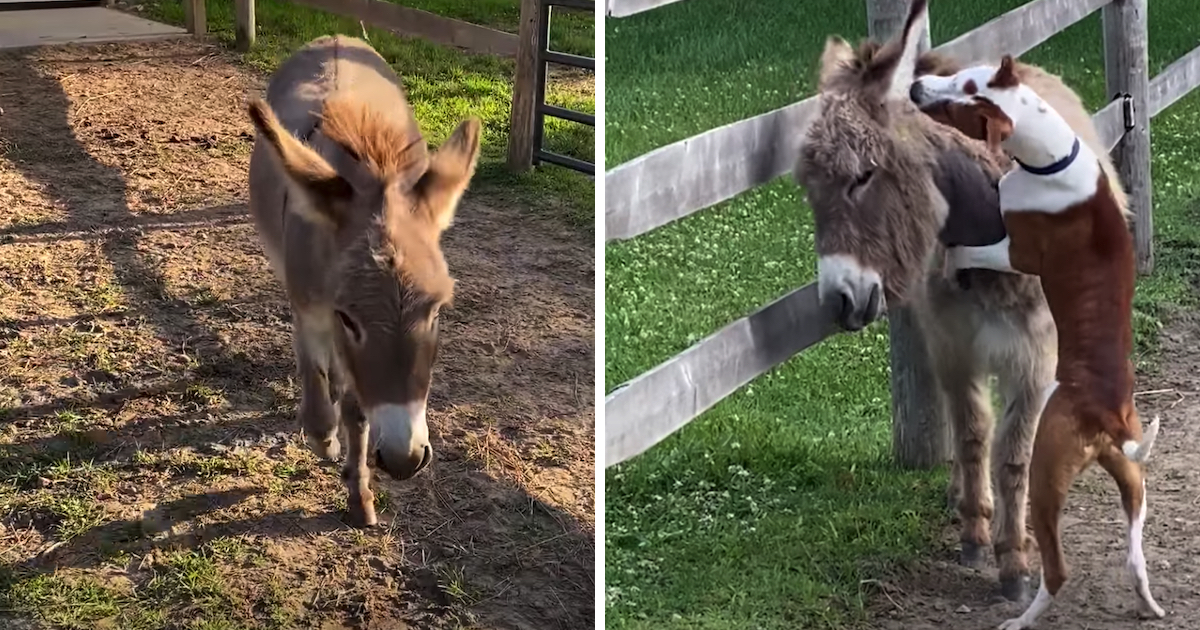 https://ilovemydogsomuch.com/wp-content/uploads/2021/10/donkey-and-dog-best-friends.jpg