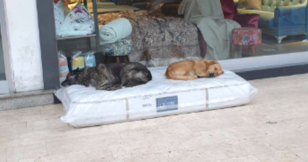 https://ilovemydogsomuch.com/wp-content/uploads/2021/10/furniture-store-lays-out-mattress-for-stray-dogs.jpg
