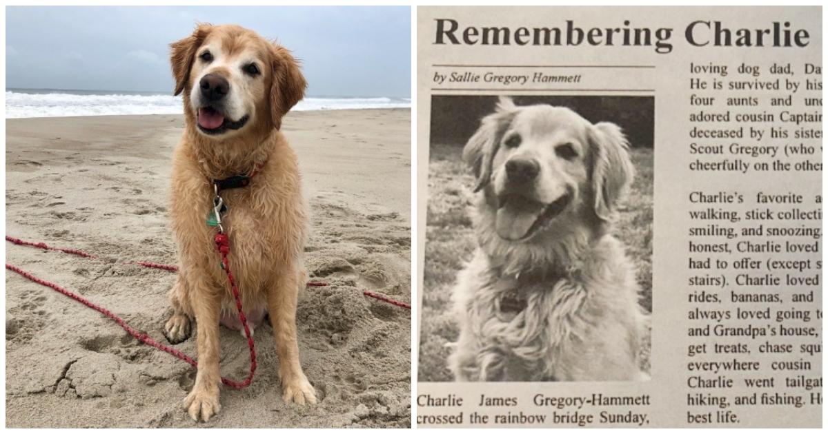 https://ilovemydogsomuch.com/wp-content/uploads/2021/10/golden-retriever-obituary.jpg