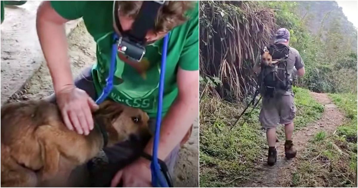 https://ilovemydogsomuch.com/wp-content/uploads/2021/10/hikers-saved-abandoned-dog.jpg