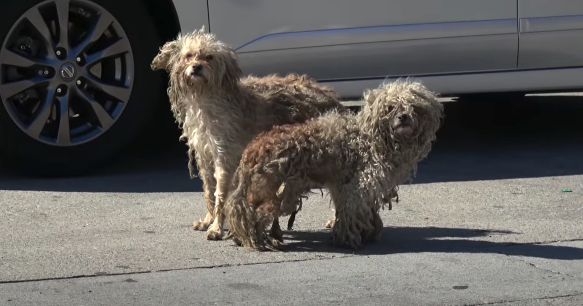 https://ilovemydogsomuch.com/wp-content/uploads/2021/10/homeless-dogs-rescued-from-the-streets.jpg