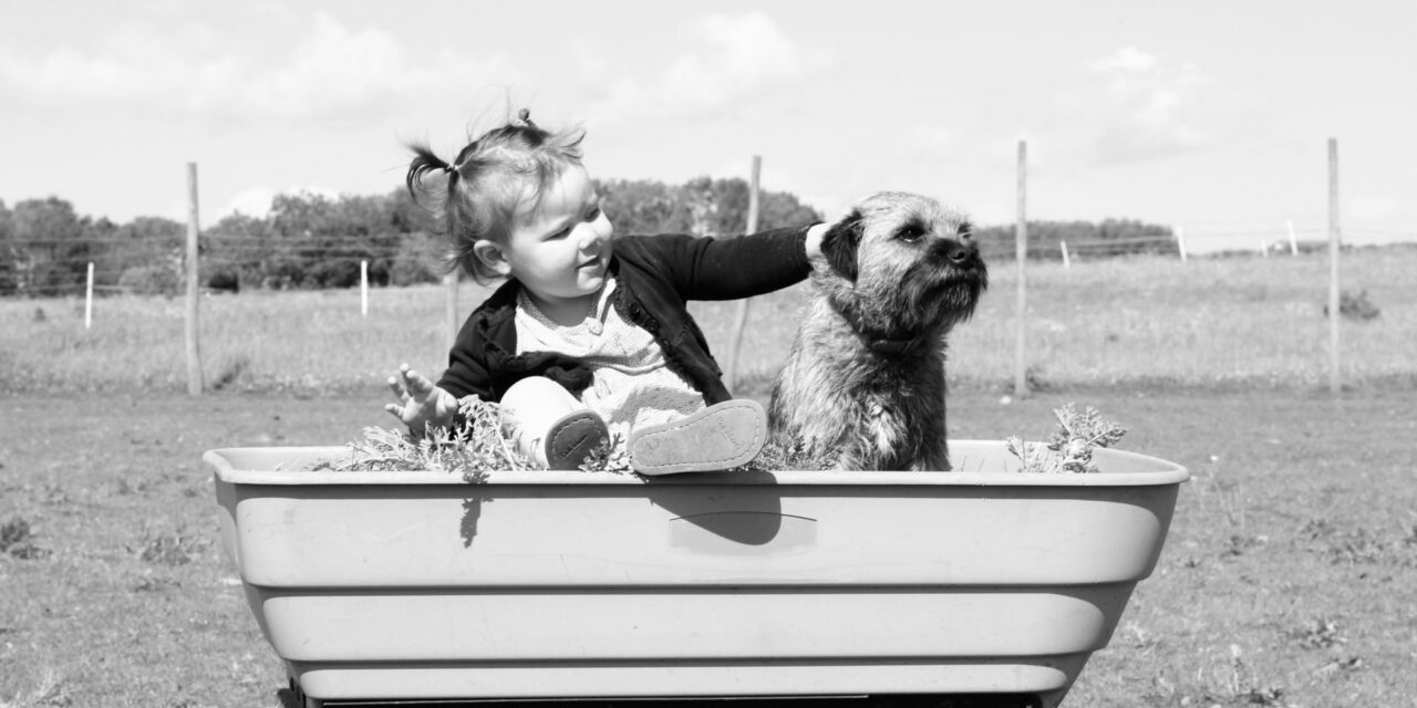 https://ilovemydogsomuch.com/wp-content/uploads/2021/10/kids-and-dogs-on-a-wagon-1280x640.jpg