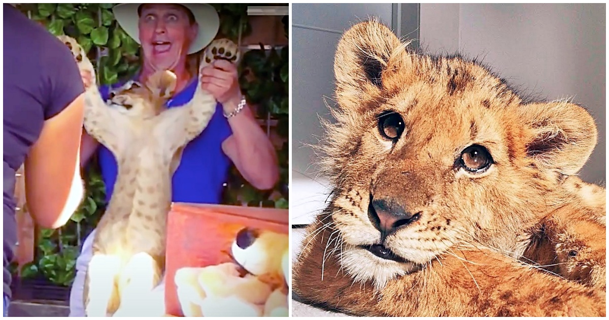 https://ilovemydogsomuch.com/wp-content/uploads/2021/10/lion-cub-abused-at-a-circus.jpg