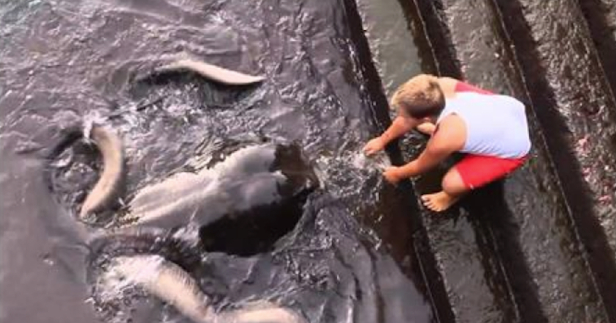 https://ilovemydogsomuch.com/wp-content/uploads/2021/10/little-boy-makes-friends-with-sea-creature.jpg