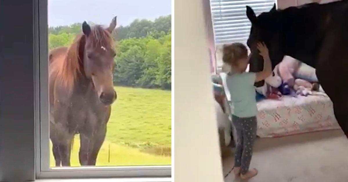 https://ilovemydogsomuch.com/wp-content/uploads/2021/10/little-girl-invites-horse-in-bedroom.jpg
