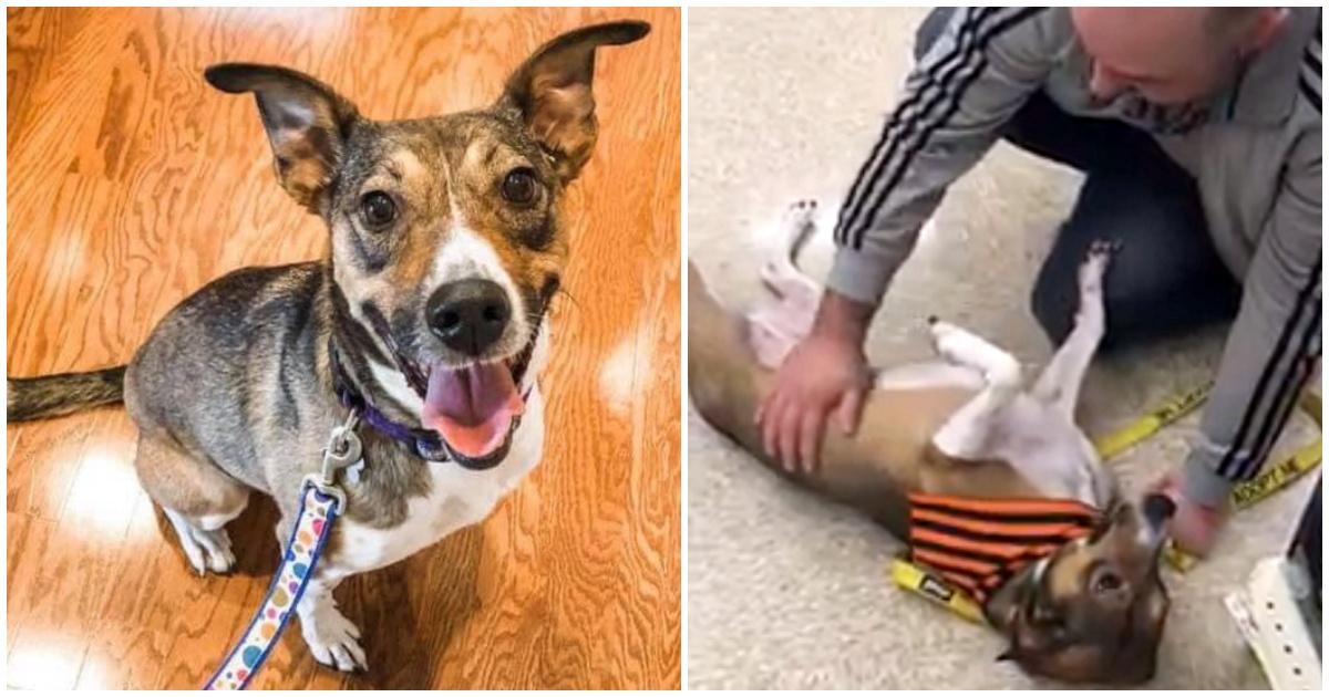 https://ilovemydogsomuch.com/wp-content/uploads/2021/10/owner-found-long-lost-dog-in-adoption-event.jpg