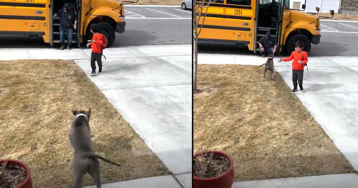 https://ilovemydogsomuch.com/wp-content/uploads/2021/10/pit-bull-greets-toddler.jpg