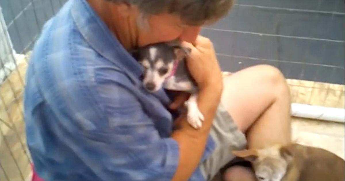 https://ilovemydogsomuch.com/wp-content/uploads/2021/10/puppy-mill-rescue.jpg