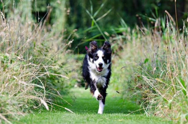 running dog in fields