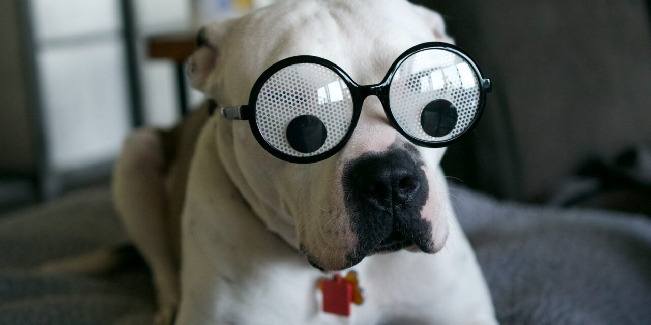 https://ilovemydogsomuch.com/wp-content/uploads/2021/10/silly-dog-with-eyeglasses-1280x640.jpg