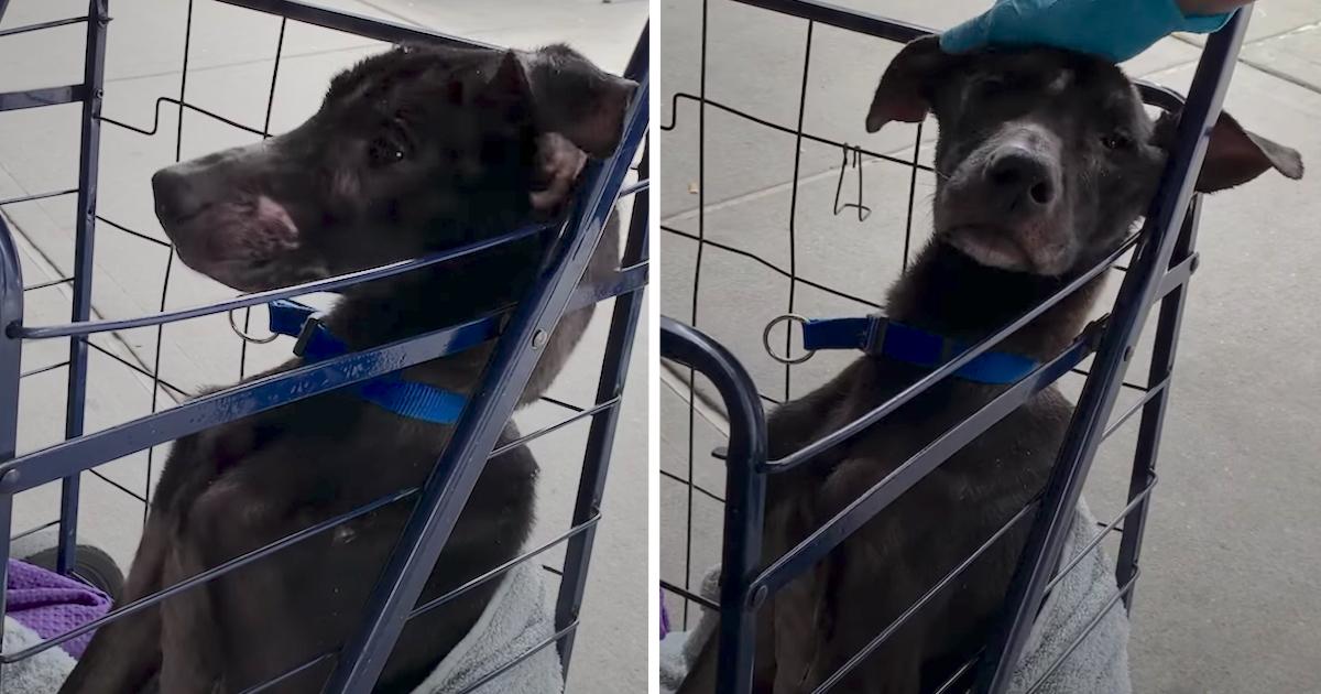https://ilovemydogsomuch.com/wp-content/uploads/2021/10/skinny-dog-rescued.jpg