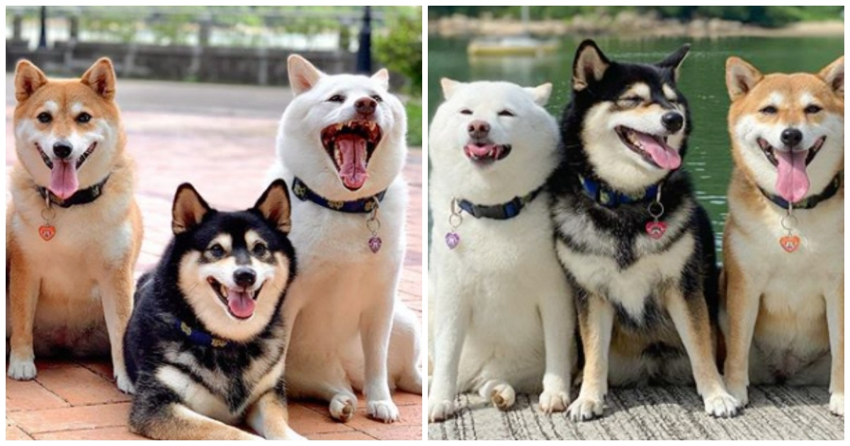 https://ilovemydogsomuch.com/wp-content/uploads/2021/10/smiling-shiba-inu.jpg