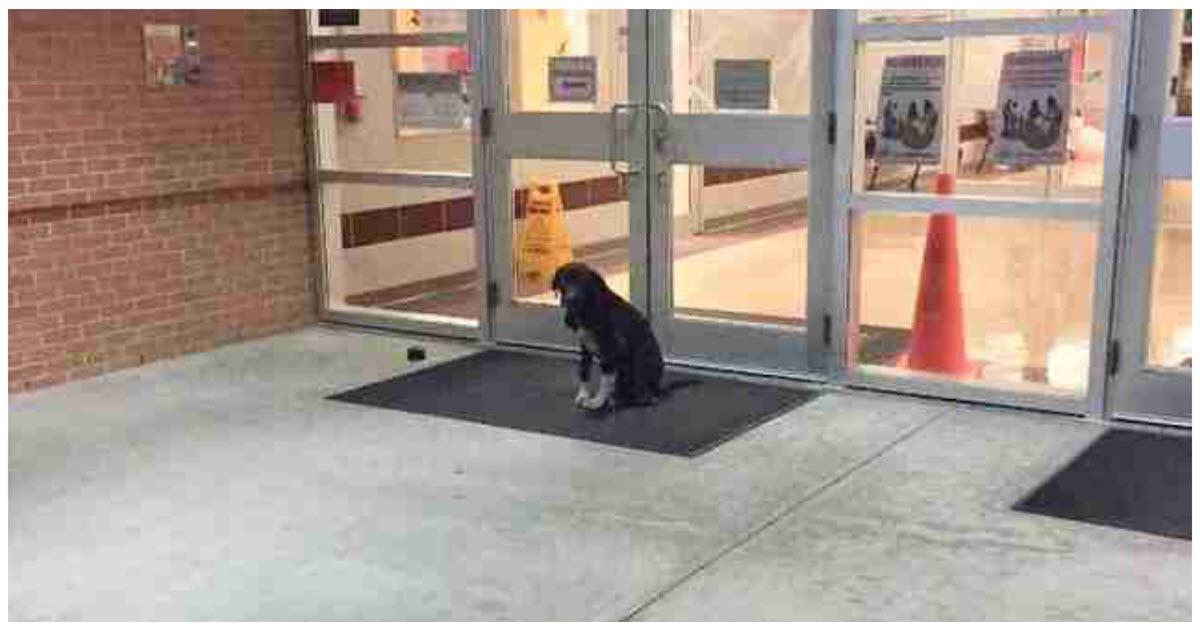 https://ilovemydogsomuch.com/wp-content/uploads/2021/10/stray-dog-at-school-entrance.jpg