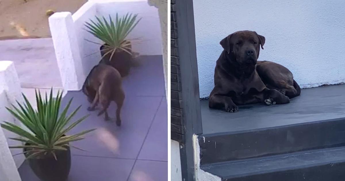 https://ilovemydogsomuch.com/wp-content/uploads/2021/10/stray-dog-seen-on-security-cam.jpg