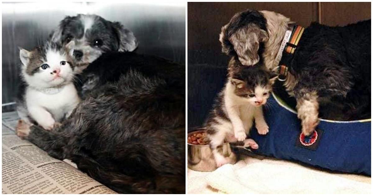 https://ilovemydogsomuch.com/wp-content/uploads/2021/10/stray-dog-takes-care-of-stray-kitten.jpg