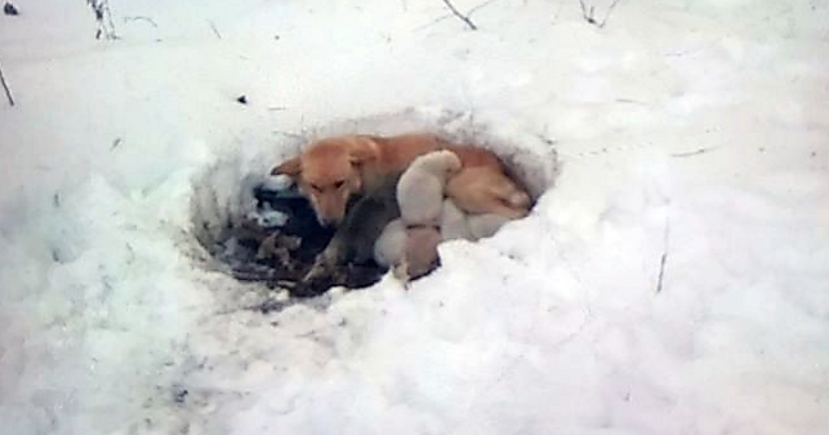 https://ilovemydogsomuch.com/wp-content/uploads/2021/10/stray-mama-dog-found-protecting-puppies.jpg