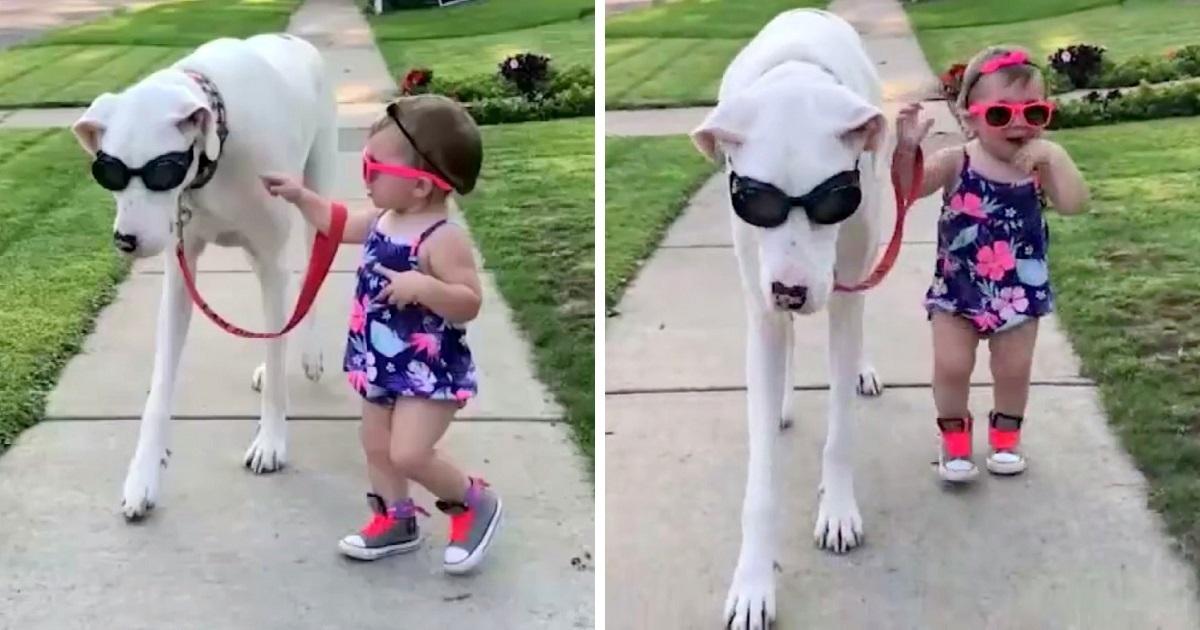https://ilovemydogsomuch.com/wp-content/uploads/2021/10/toddler-walks-with-deaf-and-blind-dog.jpg