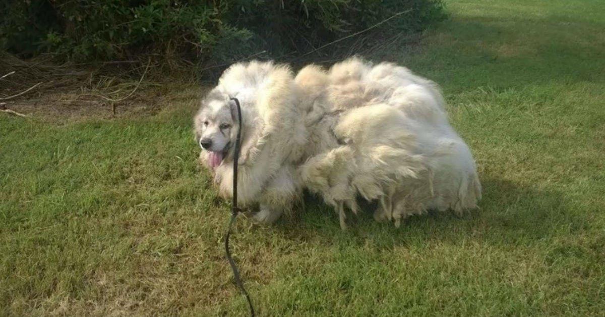 https://ilovemydogsomuch.com/wp-content/uploads/2021/10/trapped-dog-gets-makeover.jpg