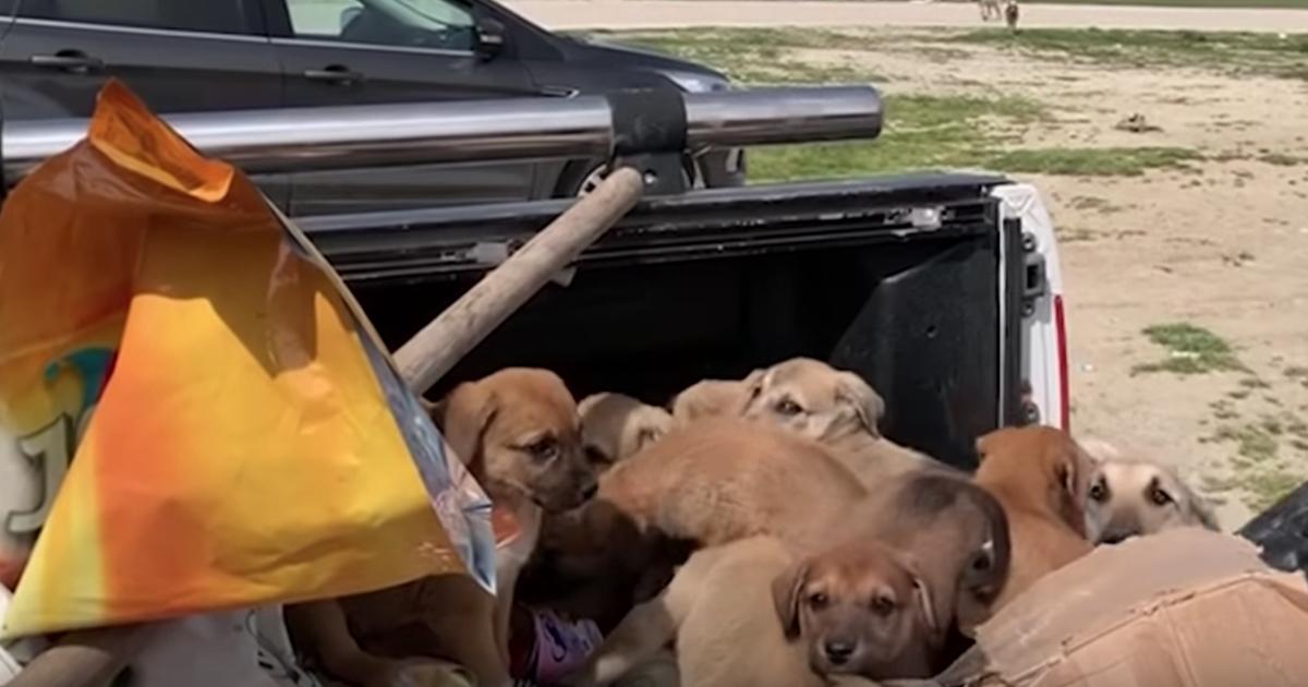 https://ilovemydogsomuch.com/wp-content/uploads/2021/10/truck-bed-puppies.jpg